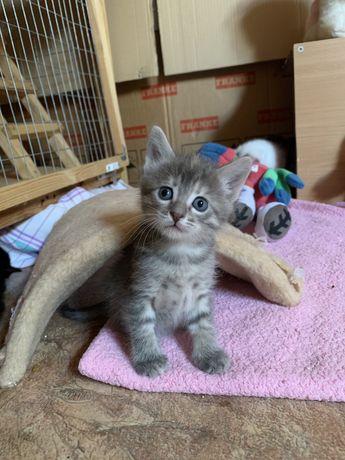 Счастье! Котята 1 месяц