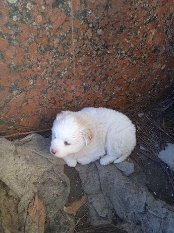 Срочно!!! щенок девочка ищет дом