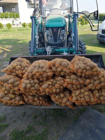 Ziemniaki odmiana Lili