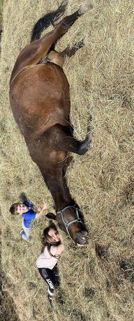 Konie zapraszam