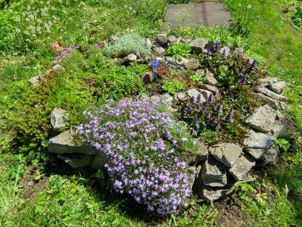 Rośliny domowe i ogrodowe na inne rośliny, krzewy, drzewka itp
