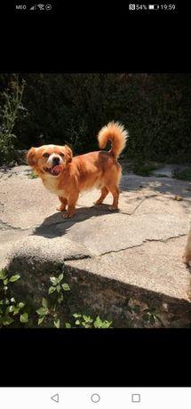 Dou 2 cães macho com cerca de 3/4 anos