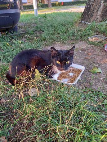 Poszukiwany opiekun znalezionego kota
