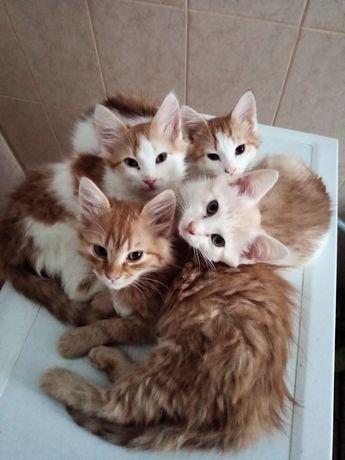 Котенята у будь-які руки
