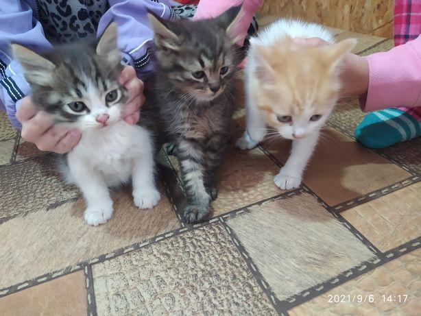 Котята ищут добрую заботливую семью