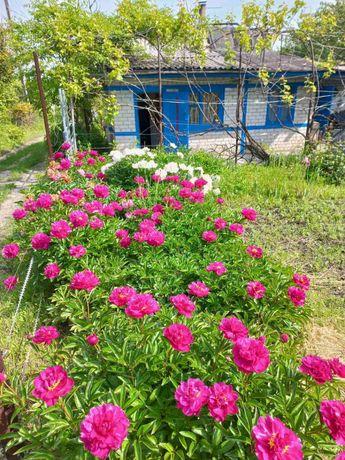 Продам дачу(сад) Верхние Сады (Медик 2)