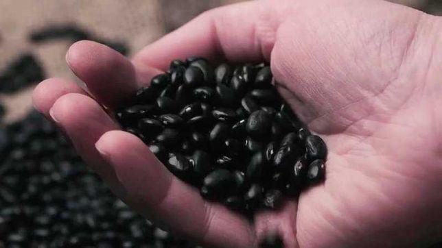 Фасоль черная урожай 2020 года