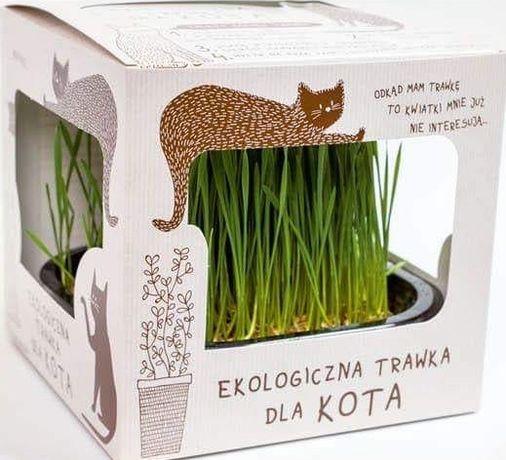Ekologiczna trawka dla Kota