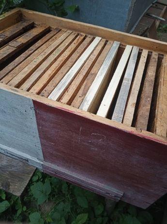 продаж бджолів з вуликами