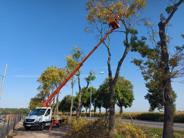 Podnośnik koszowy wynajem usługi 20m i 22m wycinka drzew