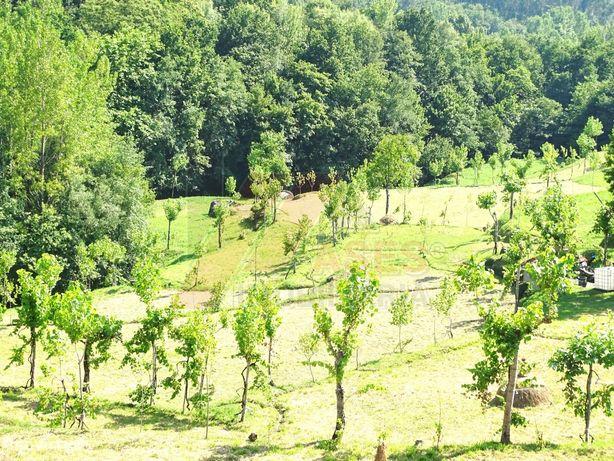 Terreno  Venda em Ribeiros,Fafe