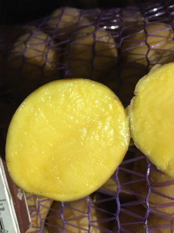 Картопля насіннева АРІЗОНА (3-ої) репродукції