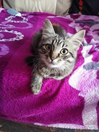 Кошечка в добрые руки, котёнок, котята