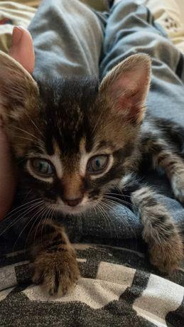 Маленький Котенок мальчик