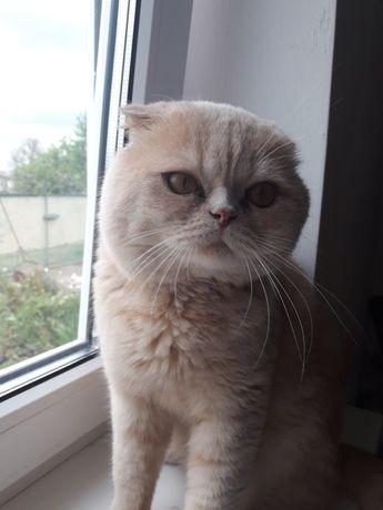 Предлагаю кота для вязки