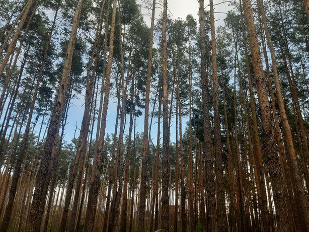 Участок 20 соток в Лесной Буче