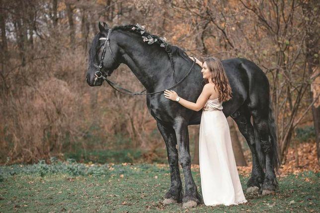 Haflinger, Fryzyjski i inne konie- sesje zdjęciowe