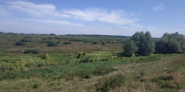Земля в Козаровичи