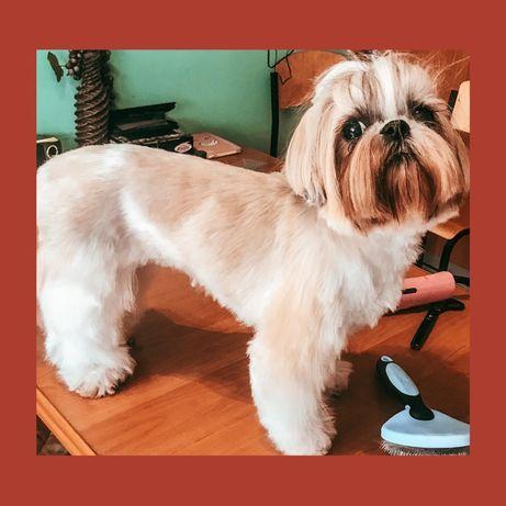 Стрижка собак, дома и на ВЫЕЗДЕ, ищу моделей!