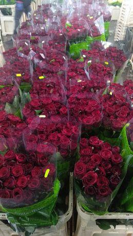 Роза, эустома оптом и розница.