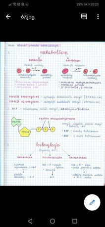 Notatki Biologia