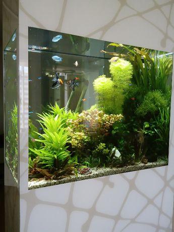 Изготовление аквариумов на заказ, дизайн, обслуживание аквариумов