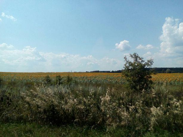 Продам земельну ділянку 2 га ( 512001П )