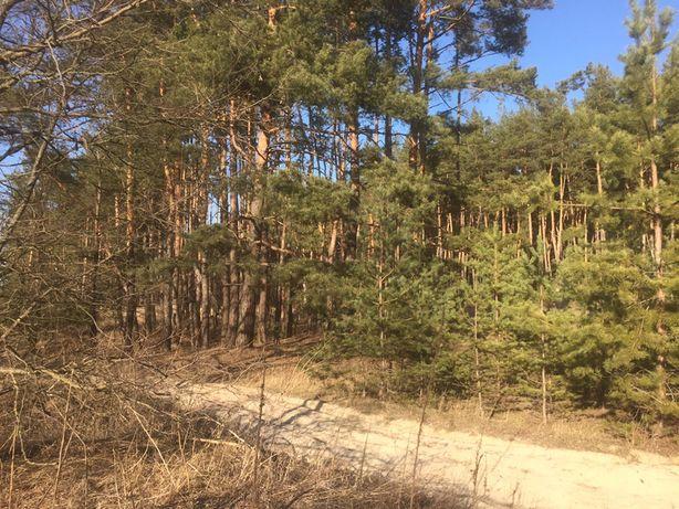 Шикарный участок с лесом, 22 сотки, сторона на Коропов Хутор!