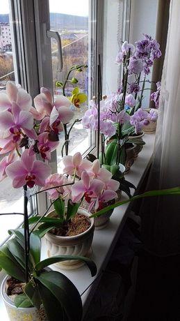 Орхідеї.Реанімація рослин