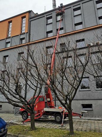 Podnośnik koszowy zwyżka wynajem zwyżki Czeladź wycinka drzew