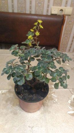 цветок Дерево Любви