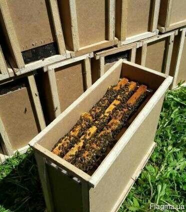 Пчелопакети Карпатки 2020
