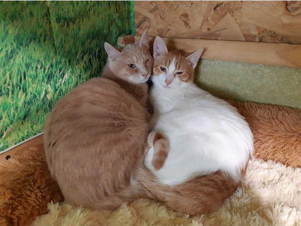 Два котика муркотика