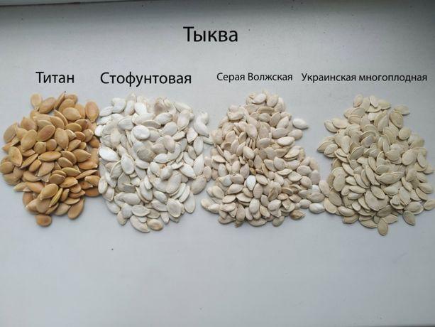 Семена тыквы. Насіння гарбуза
