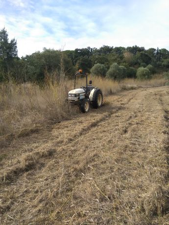 Trabalho de limpeza de terrenos e abate de árvores
