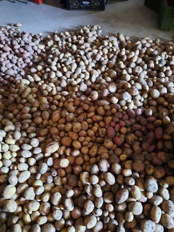 Batatas brancas ou vermelhas
