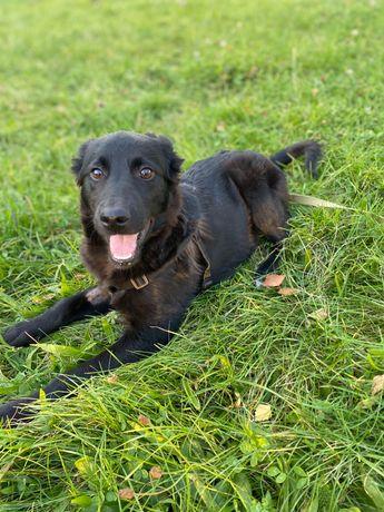 Собака щеня до року з блискучою шерстю приручена