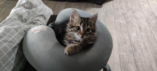 Котенок в хорошие руки с доставкой)