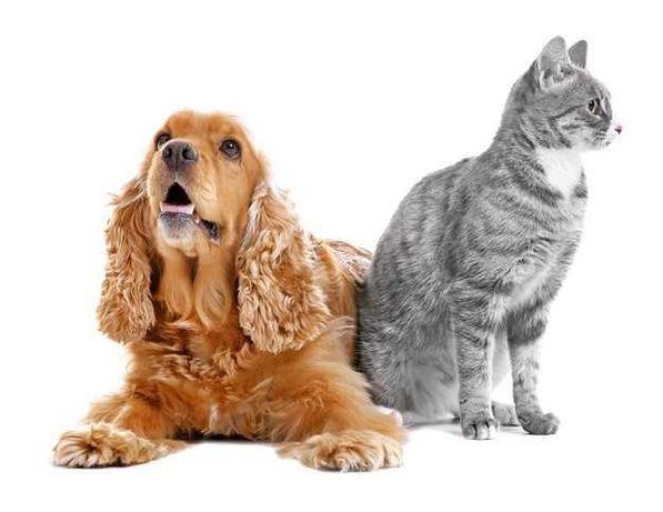 Стрижка собак и котов. Груминг.Возможен выезд на дом. Передержка.