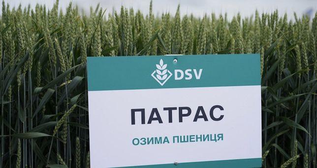 Продам семена пшеницы сорт Патрас DCV