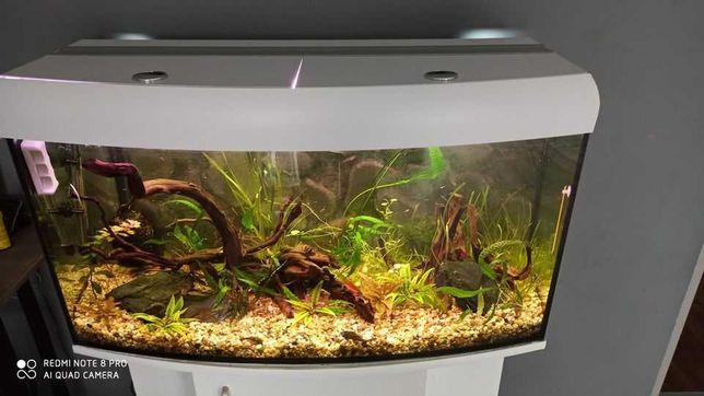 Akwarium 200l.z całym wyposażeniem