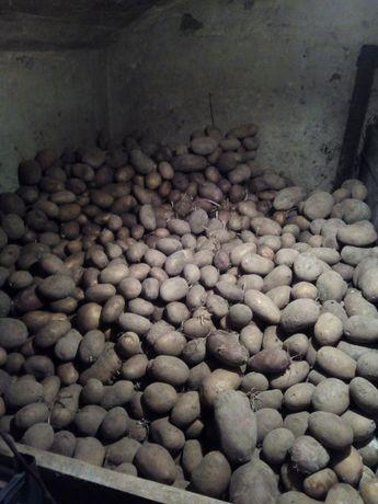 Акция,продам картошку
