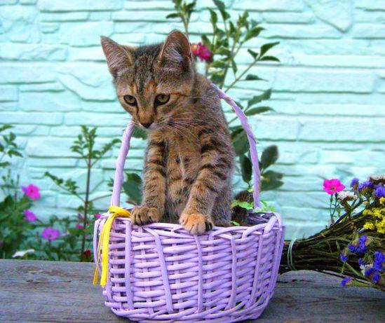Котенок Афина, 3 месяца, срочно нужен дом