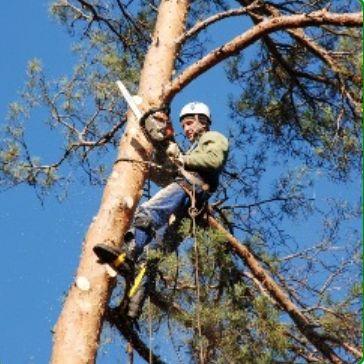 Спил, обпил, удаление деревьев