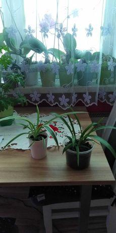 Sprzedam sadzonki roślin
