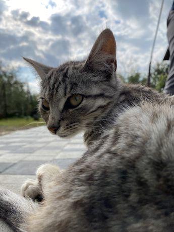 Кішка шукає дім
