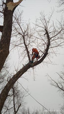 Спил, обрезка деревьев любой сложности.Выкорчевывание пней вручную.