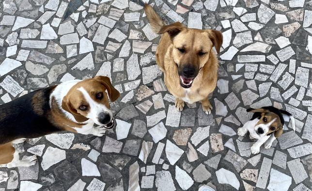 Passear Caes / Dog Walker