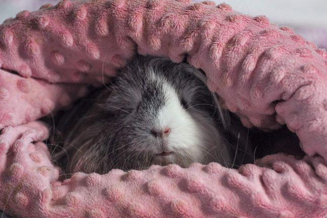 Norka śpiwór jama dla gryzoni swinki szczura jeża wiewiórki fretki