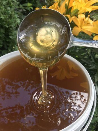 Продам свіжий липовий мед, збір 2020року